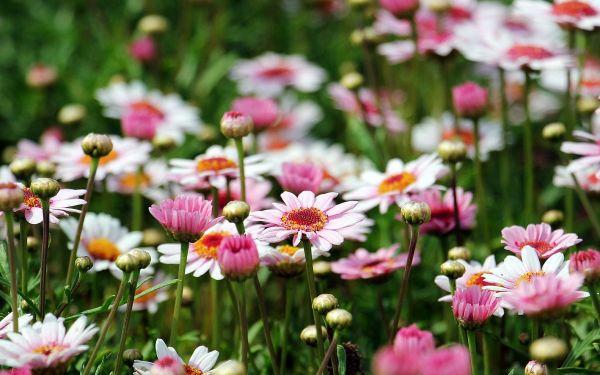 Tuinieren in je levenstuin